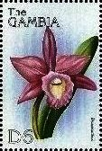 Stamp, Laeliocattleya, Gambia,  , Flowers, Orchids