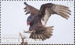 Stamp, Turkey Vulture, Antigua and Barbuda,