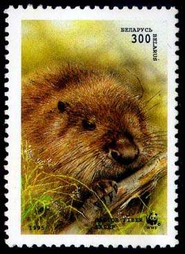 Stamp European beaver (gnawing the branch)