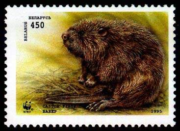 Stamp European beaver (carrying the branch)