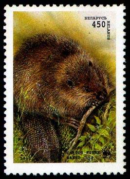 Stamp European beaver (sitting)