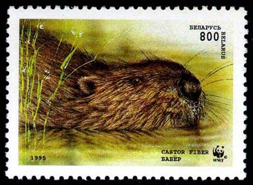 Stamp European beaver (swimming)
