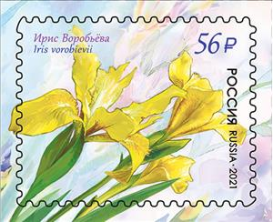Flora of Russia. Flowers. Irises listed in the Red Book of the Russian Federation