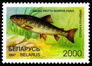 Stamp Rare fish species of Belarus - Trout