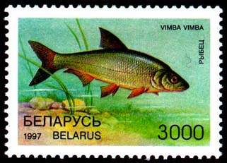 Stamp Rare fish species of Belarus – Vimba