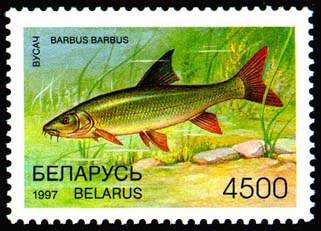 Stamp Rare fish species of Belarus - Barbel