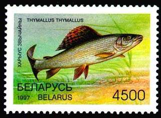 Stamp Rare fish species of Belarus - Grayling