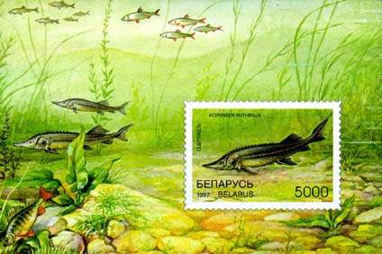 Souvenir sheet Rare fish species of Belarus - Sterlet