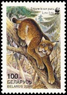 Stamp European Lynx (view 2), WWF
