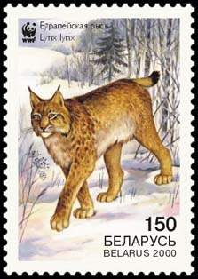 Stamp European Lynx (view 4), WWF