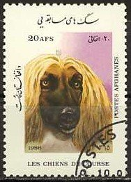 Afghan Hound (Canis lupus familiaris)