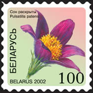 Definitive stamp Pulsatilla patens (self-adhesive)