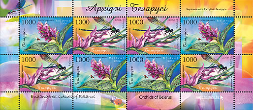 Sheetlet Orchids of Belarus