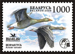 Stamp A bird of the year – Grey goose