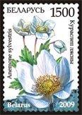 Stamp Endangered plants of Belarus – Snowdrop anemone