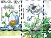 Stamp Endangered plants of Belarus – Snowdrop anemone+1 coupon
