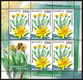 Sheetlet Endangered plants of Belarus – Scorzonera (5 stamps + 1 coupon)