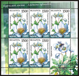 Sheetlet Endangered plants of Belarus – Snowdrop anemone (5 stamps +1 coupon)