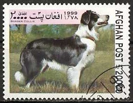Border Collie (Canis lupus familiaris)