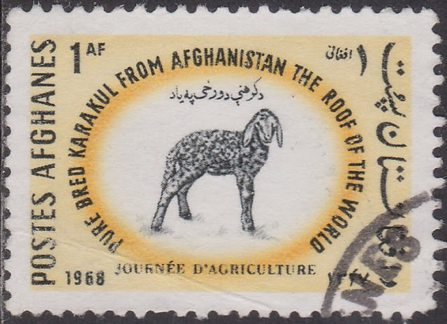 Karakul Sheep (Ovis ammon aries)
