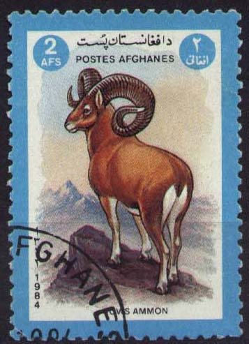 Argali or Mountain Sheep (Ovis ammon)