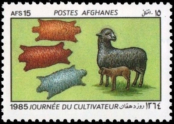 Karakul Sheep (Ovis ammon aries) with Lamb, Furs