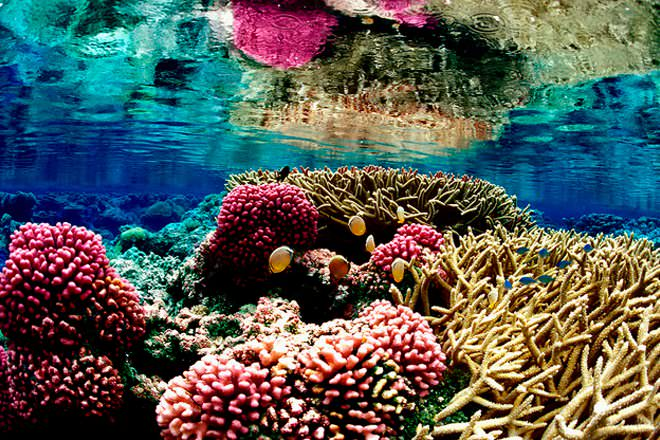 Corals and Sponges