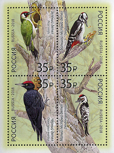 Fauna of Russia. Woodpeckers