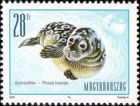 Ringed Seal (Phoca hispida)