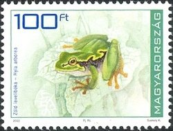 Common Tree Frog (Hyla arborea)