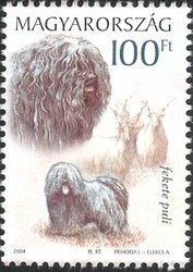 Puli (Canis lupus familiaris), Wallachian Sheep (Ovis aries