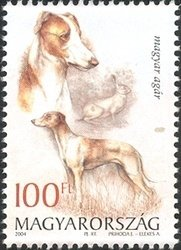 Hungarian Greyhound (Canis lupus familiaris), European Hare