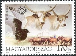 Hungarian Steppe Cattle (Bos primigenius taurus hungaricus)