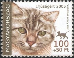 For Youth 2005 - Domestic cat