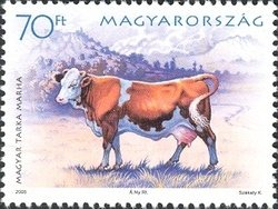 Hungarian spotted cow