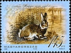 Hungarian Giant Rabbit (Oryctolagus cuniculus domesticus)