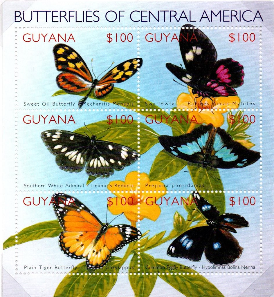 Butterflies of Central America