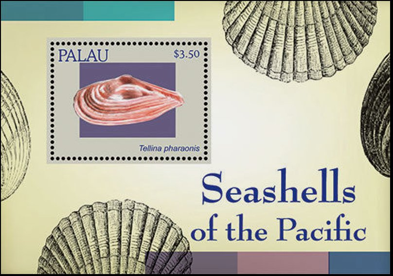 Seashells of the Pacific
