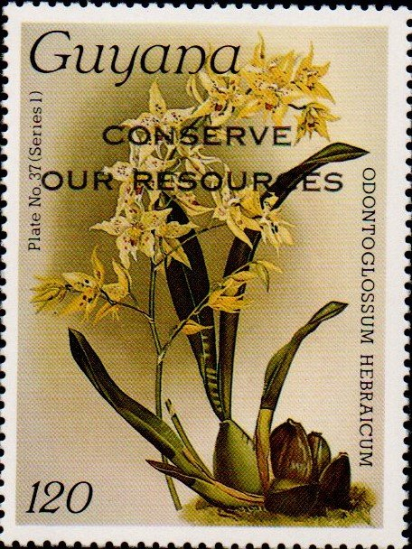 """Conserve Our Resources"" on 120c Plate No. 37 (series 1)"