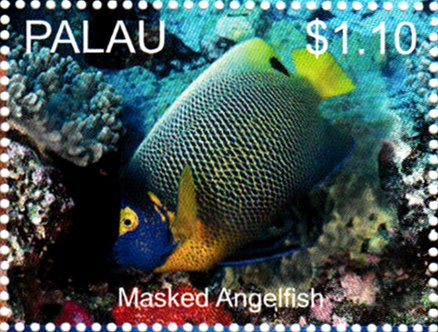 Masked Angelfish (Pomacanthus xanthometopon)