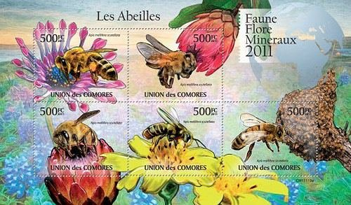 Insects - African Honey Bee