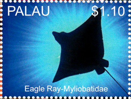 Eagle Ray (Potamotrygon sp.)