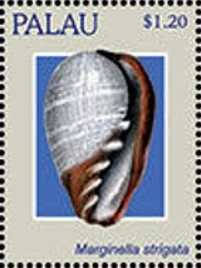 Marginella strigata