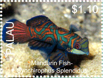 Mandarin fish (Synchirophus splendidus)