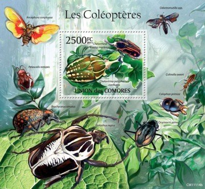 Insects - Beetles