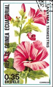 Stamp, Lavatera trimestris, Equatorial Guinea,  , Flowers, Plants (Flora)