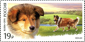 German Shepherd and the Scottish Shepherd (collie). Service Breeds of Dogs series