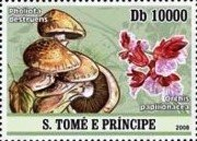 Stamp, Mushrooms and orchids, São Tomé and Príncipe,  , Flowers, Mushrooms, Orchids, Plants (Flora)