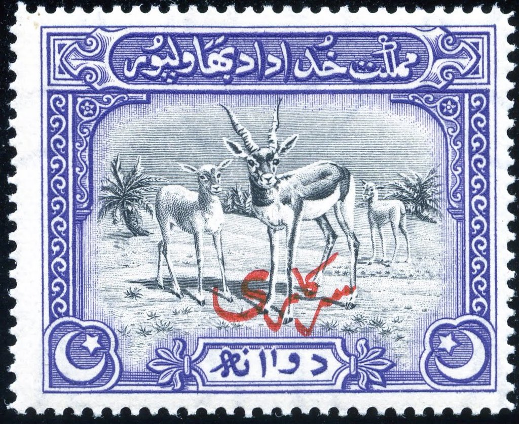 Blackbuck (Antilope cervicapra), Red Arabic Overprint