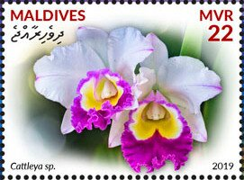 Stamp, Cattleya sp., Maldives,  , Flowers, Orchids, Plants (Flora)